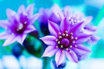 Spring Flowers von fraenks