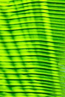 Green leaf texture, close-up by Tatyana Nazarenko