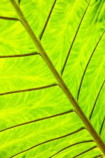 Green leaf texture, close-up von Tatyana Nazarenko