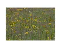Blumenwiese by lisa-glueck