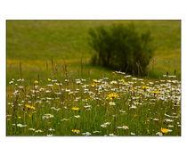 Sommerwiese von lisa-glueck