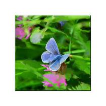Schmetterling im Klee von lisa-glueck
