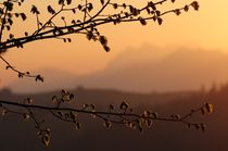 Erstes Morgenlicht von Bruno Schmidiger