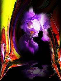 Blütenträume 16 Lilie by Walter Zettl