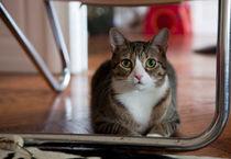 Tabby cat by Karen Cowled