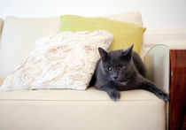 Russian blue by Karen Cowled