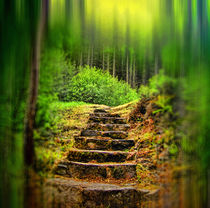 A Path to the Forest. by Dave Harnetty