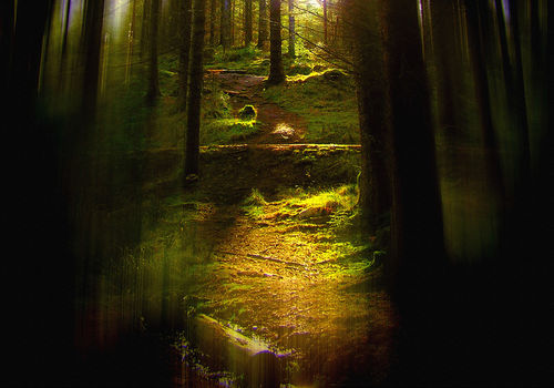 Through-the-pines-3