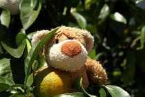 Orangenbärchen von Olga Sander