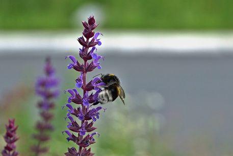 Blume-insekt-001-6000c