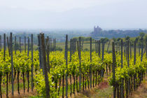 View from a vineyard to Breisach am Rhein, Germany by Jörg Sobottka