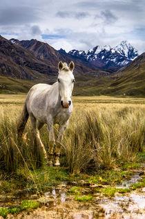 Wild Horse von tapinambur