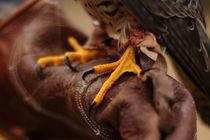 Greifvogelkralle von Stefan Mosert