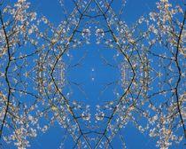 Kirschblüten Himmelskranz 1 by Tatjana Wicke