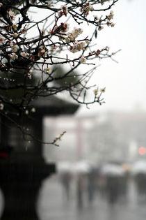 Rain von Marcus Skupin