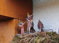 Tiere von Manfred Duckhorn