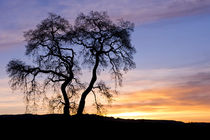 Winter Sunrise With Tree Silhouette by Priya Ghose