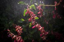 Summer Rain On Sage by Priya Ghose