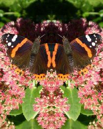Schmetterling auf rosa Blüten  1 by Tatjana Wicke