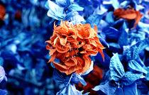 Flower by Giorgio Giussani