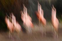 'Dancing Flamingo' by Rolf Möller