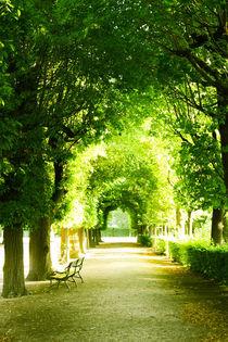 'Zauberhafte Baumallee im Schlosspark' by Dani Mitter