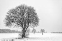 Baum im Schnee von Rainer Schmitz