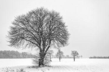 2013-02-24-eos-40d-4699-bearbeitet