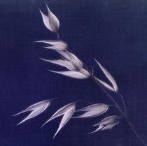 Blue-oat