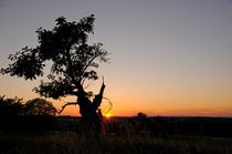 Tree in sunset by Michael Ebardt