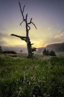 Misty summer sunrise by Dave Wilkinson