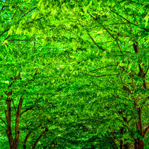 Leuchtend grünes Blätterdach von Gina Koch