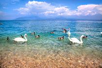 Schwäne auf dem Gardasee von Gina Koch