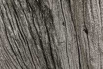 Olive tree by Anne Kelleter