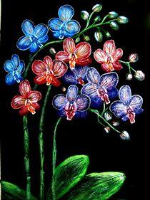 Orchideen von konni
