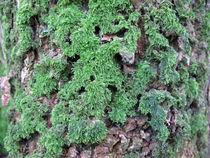 Moss on a tree bark von Christopher Jöst