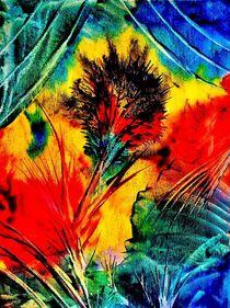 Feuerblume von konni