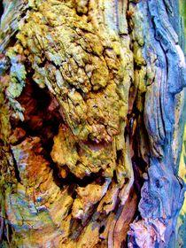 Natur und Kunst 1 von konni
