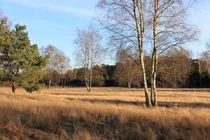 Westruper Heide von Marcus Skupin