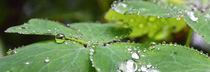 Perlen der Natur von Isabell Tausche