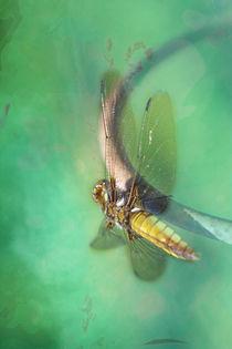 DRAGONFLY by © Ivonne Wentzler