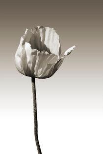 Windbrüchig von Bastian  Kienitz