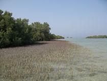 Grey Mangroves (Avencia marina) II von Christopher Jöst