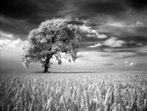 IR Baum by Peter Rohde