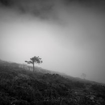 In the mist #2 von Antonio Jorge Nunes