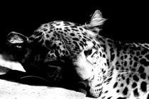 Wildkatze by fotodesignbyalex