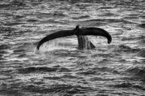 Whale Watching in Gloucester, Massachusetts von Matilde Simas