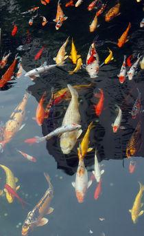 Bunte Goldfische von Sabine Radtke