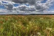 Wheat Field Flowers von David Tinsley