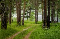 Resting in the Forest  von larisa-koshkina